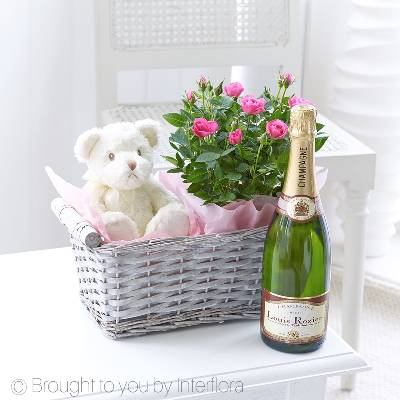 Here's a thoughtful gift perfect for a new Mum and Dad, to celebrate their new arrival. We've chosen a beautiful minature rose that's ready to plant. We've added champagne for the perfect celebratory toast, and a cute, cuddly bailey teddy for baby. Featuring a miniature rose plant, an ivory coloured teddy bear and a 75cl bottle of  Jules Feraud Champagne champagne in a split willow basket, all carefully hand delivered by Sandra's Florist.