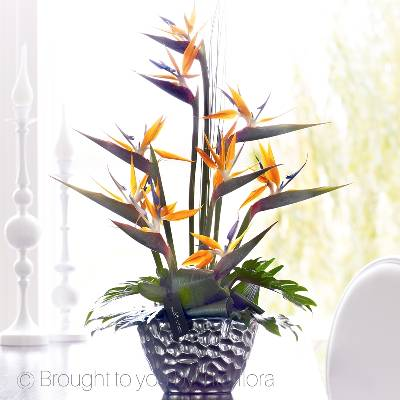 This expertly arranged display of sensational Strelitzia is a celebration of creativity and colour. With an exotic feel and a contemporary look, this striking arrangement is perfect for making a big impression when Sandra's Florist carefully hand deliver it.