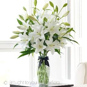 This fabulous gift really showcases the full beauty of these stunning Oriental lilies. Beautifully displayed in a slim, clear crackle glass vase to really emphasise the splendour of the flowers and play on the contrast of crisp, white petals set against rich green leaves. A contemporary, luxurious design and a beautiful way to enjoy lilies.  Sandra's Florist will expertly arrange this breath-taking design that features a generous selection of fresh white Oriental lilies into a crackle glass vase and present it in luxurious packaging for maximum impact when your gift is delivered.