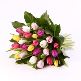 Delightful Tulips are tied together with Fatsia leaves and complimenting foliage to create this simplistic Tulip sheaf. This pure but unusual tulip sheaf is available in White, pink or mixed tulips. Carefully created and hand delivered by Sandra's Florist.  Please note: Tulips may have limited availability at certain times of the year.