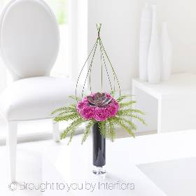 A single succulent set in a circular base of cerise carnations and umbrella fern fronds anchors this stylish geometric design that will be skilfully created by Sandra's Florist. Sculptural grass is used to create enclosed space that creates an illusion of height and structure.