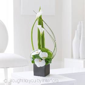 Three pristine Phalaenopsis orchid flowers are set against the contrasting form of lime green chrysanthemum blooms. From here, the eye sweeps round and up towards two perfect calla lilies, their green stems culminating in the purest white bell-shaped petals. This design will be skilfully created and carefully hand delivered.