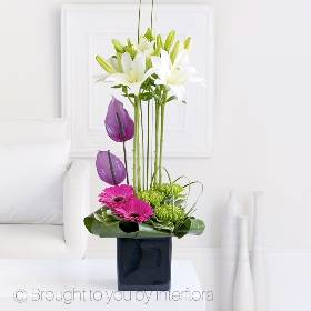 This elegant and striking gift features the very finest fresh Asiatic lilies above a bed of sumptuous colour. It is a real design statement, resulting in a breath-taking centrepiece. Featuring white Asiatic lilies, green bloom chrysanthemums, along with anthuriums for the touch of the tropical. The bright cerise gerbera add extra colour with a selection of complimenting foliage including aspidistra leaves and elegant grass. All arranged by Sandra's Florist and presented in a black cube vase.