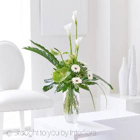 This clean cut arrangement is perfect for any home and occasion. The graceful Calla Lilies draw your eye though the arrangement with the green Anthuriums giving an almost zen quality to the vase arrangement. The white germini are elevated from the other complimenting flowers and foliage to complete the design. Sandra's Florist will skilfully create this beautifully elegant design before carefully hand delivering it.