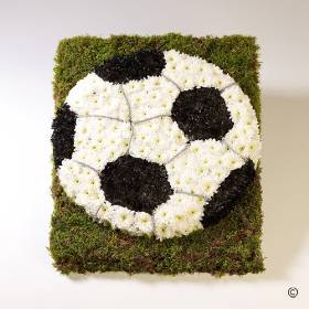 This football tribute is created by arranging a circle of double Spray Chrysanthemums into the base. The distinctive football patches are of black and white are added to the Football design. which is then finished by Sandra's florist with the addition of surrounding moss.